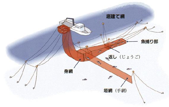 底建網漁業の写真