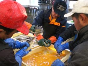 STEP1:漁獲したブリコで受精!