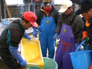 STEP3:稚魚を放流するための準備!